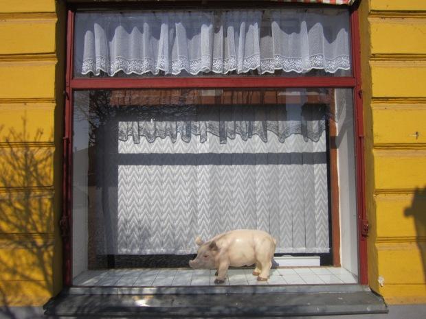 Shop window in the Czech Republic